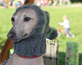 Hand Knit Dog Hat