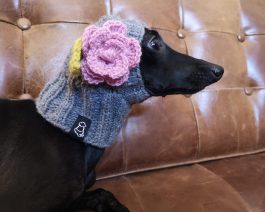 Dog Hat with a Flower