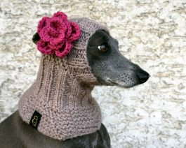 Dog Snood with a Flower