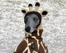 Giraffe Dog Hat