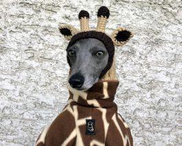 Giraffe Dog Hat