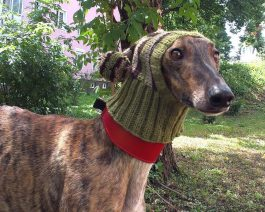 Hand Knit Dog Hat with Stripes