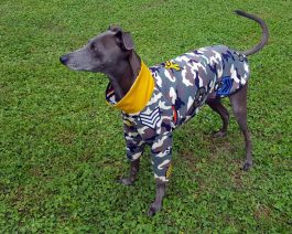 Italian Greyhound Sweatshirt – size M
