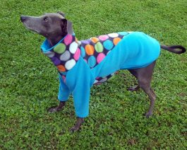 Italian Greyhound Shirt – size M