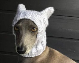 Hand Knit Dog Hat with Ears