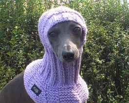 Dog Snood / Italian Greyhound Snood / Hand Knit Dog Hat