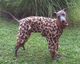 Italian Greyhound Fleece Pajamas/ Animal Print Dog Pajamas