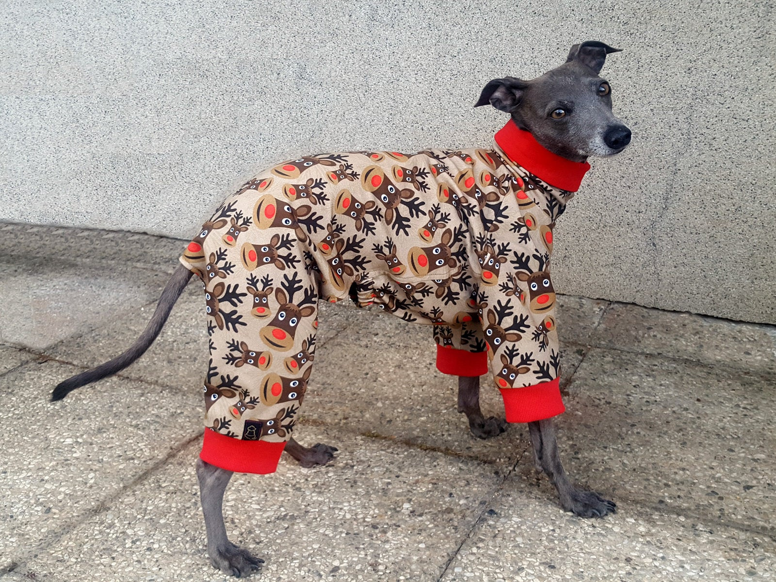 Christmas Pajamas For Dog.Italian Greyhound Sweat Pajamas