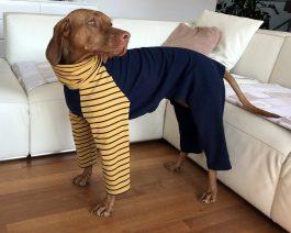Vizsla Sweatshirt / Large Dog Pajamas