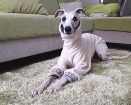 Whippet Fleece Pajamas
